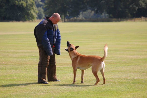 Dog Training cosford