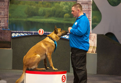 Puppy Training Classes cosford